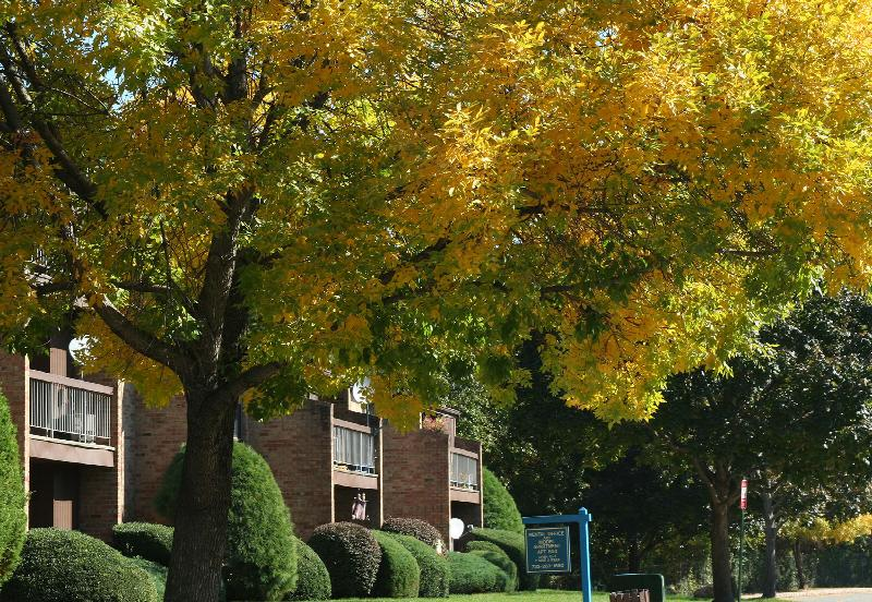 Gill Lane exterior photo in the fall showing large trees with leaves changing color to yellow. An apartment building with green shrubs fills the background