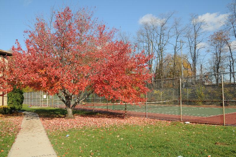 Woodbridge Village community tennis courts can be seen behind a large tree with red leaves.